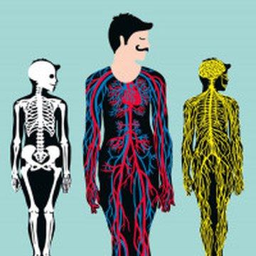 Mamania - Anatomia. Obraz ludzkiego ciała na wyjątkowych ażurowych rycinach