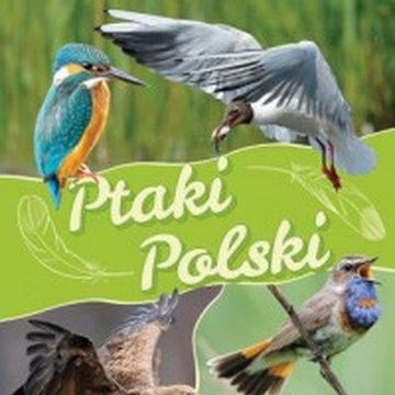 Fenix - Ptaki polski
