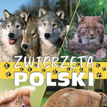 Fenix - Zwierzęta Polski